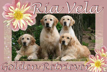 Ria Vela, Golden Retriever.